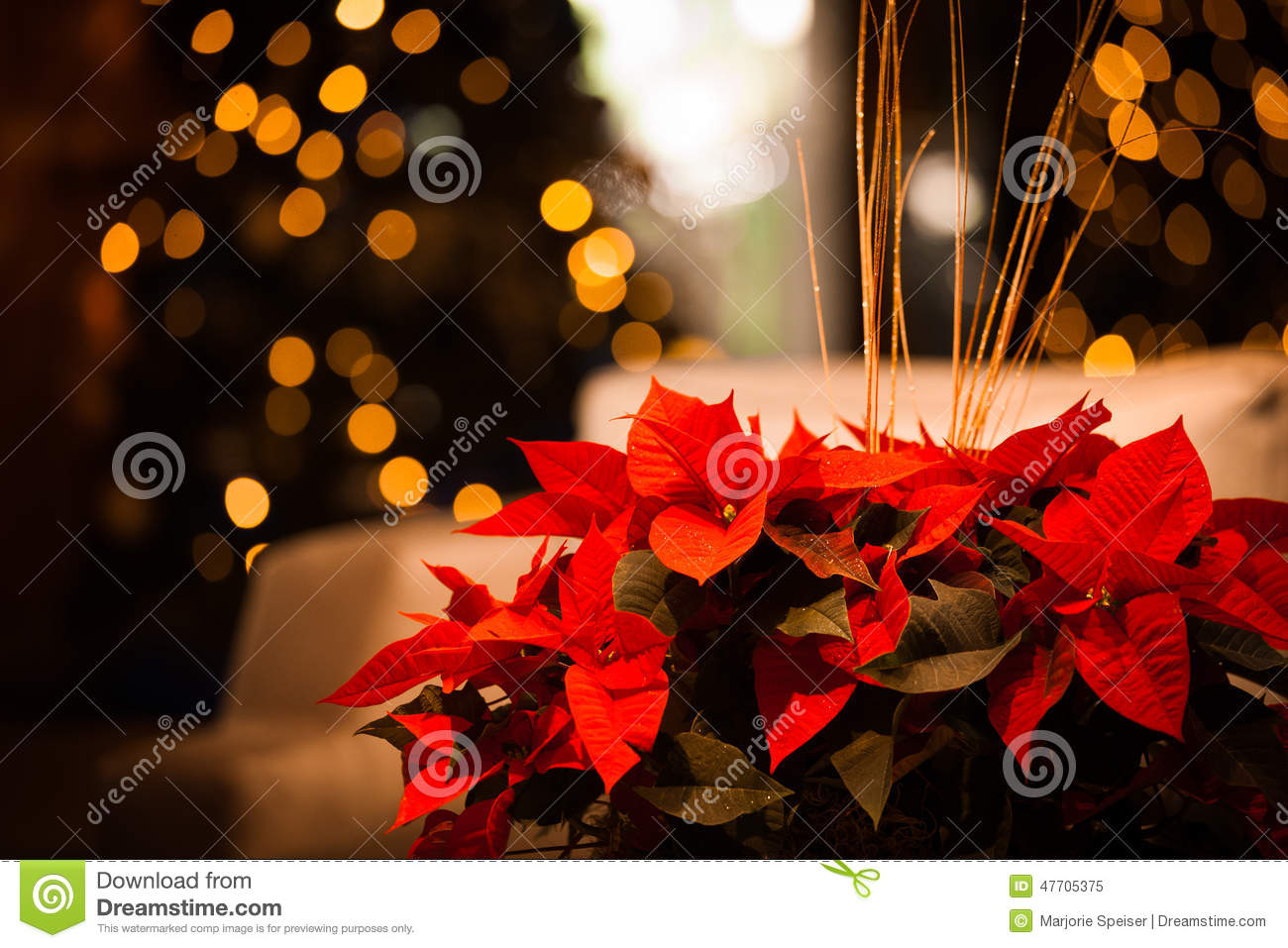 Christmas flower card with gold stock image