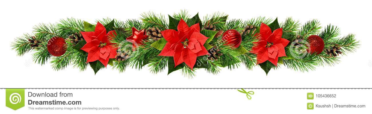 Christmas garland with red pionsettia flowers, pine twigs and de