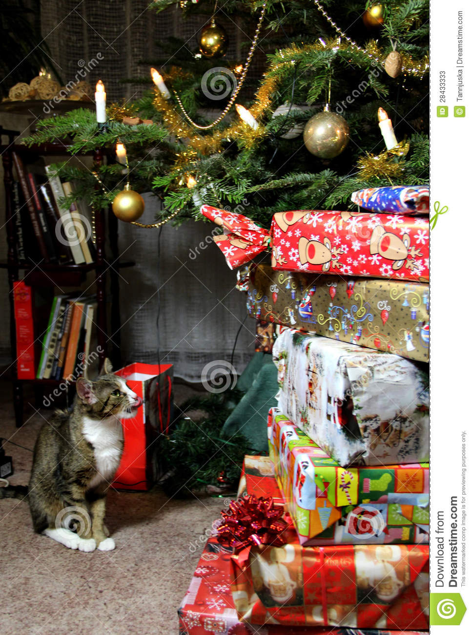 Christmas Gifts And Funny Cat Stock Image - Image of interior ...