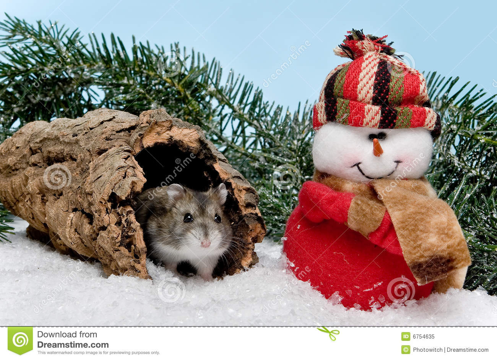 christmas hamster royalty free stock photo image 6754635 hamster clip art free hamster clip art coloring page