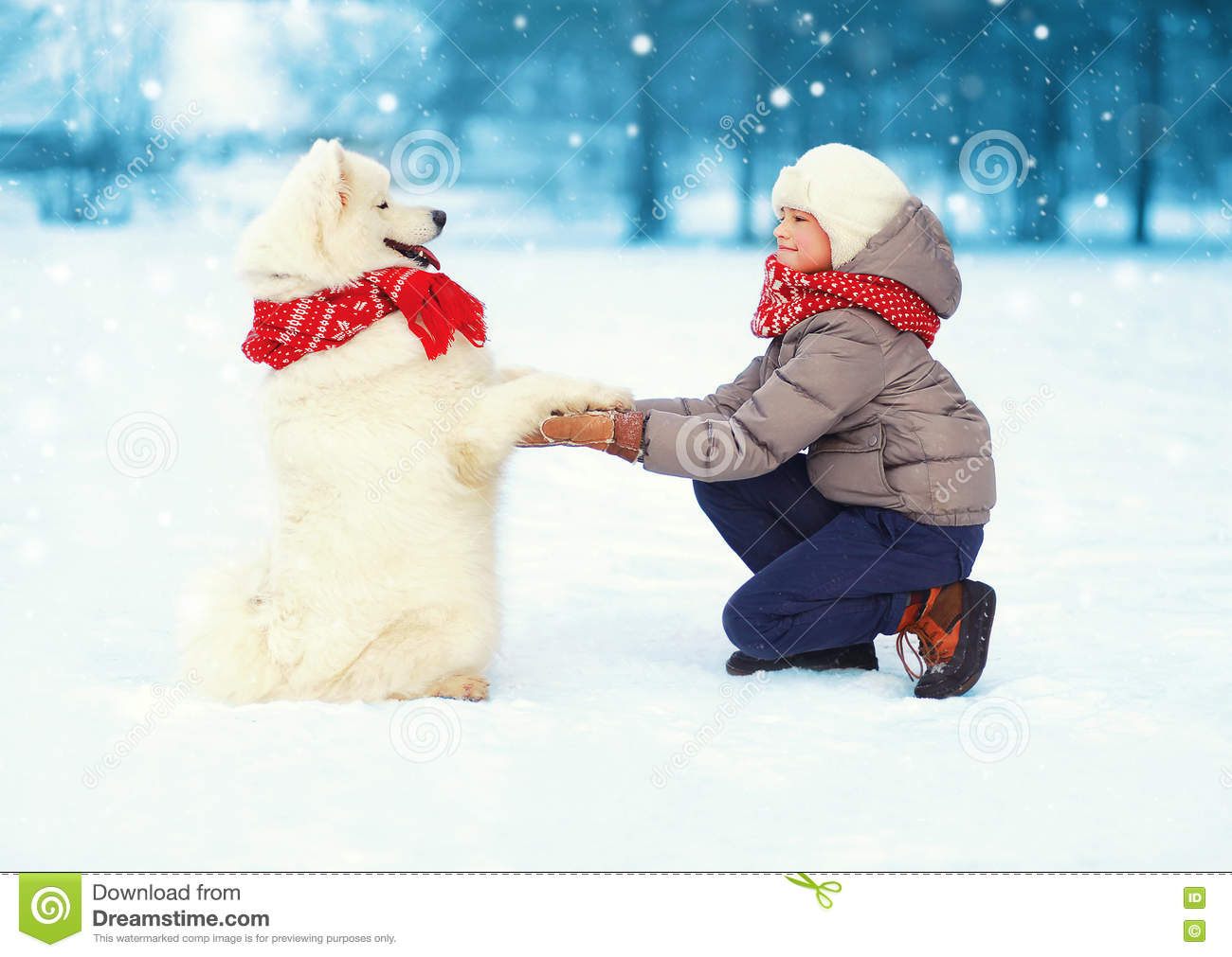 Christmas happy teenager boy playing with white Samoyed dog on snow in winter day, positive dog gives paw child