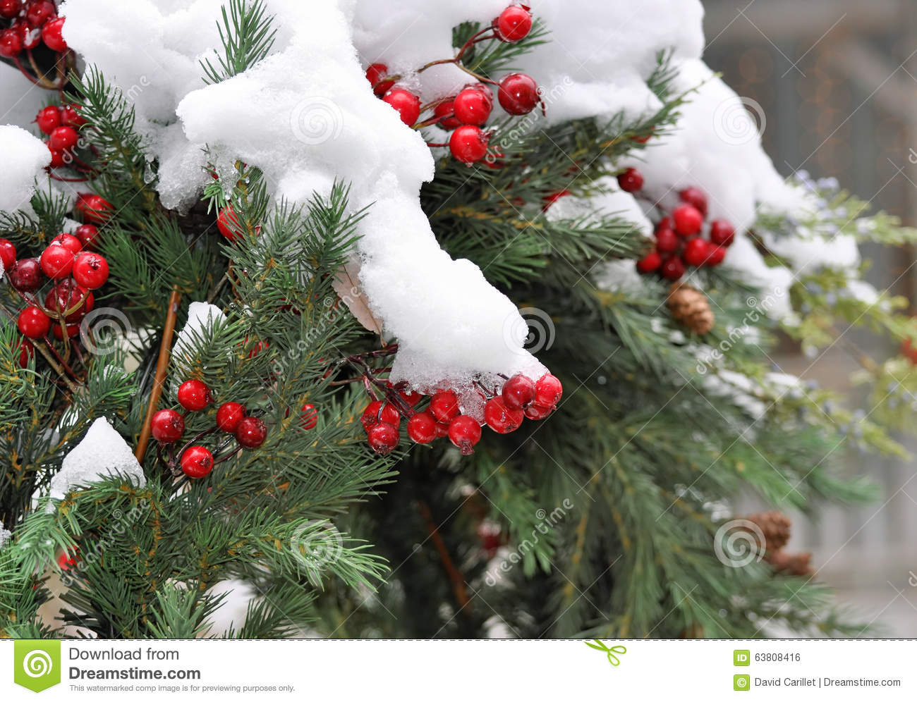 Christmas holiday evergreen wreath covered with real snow