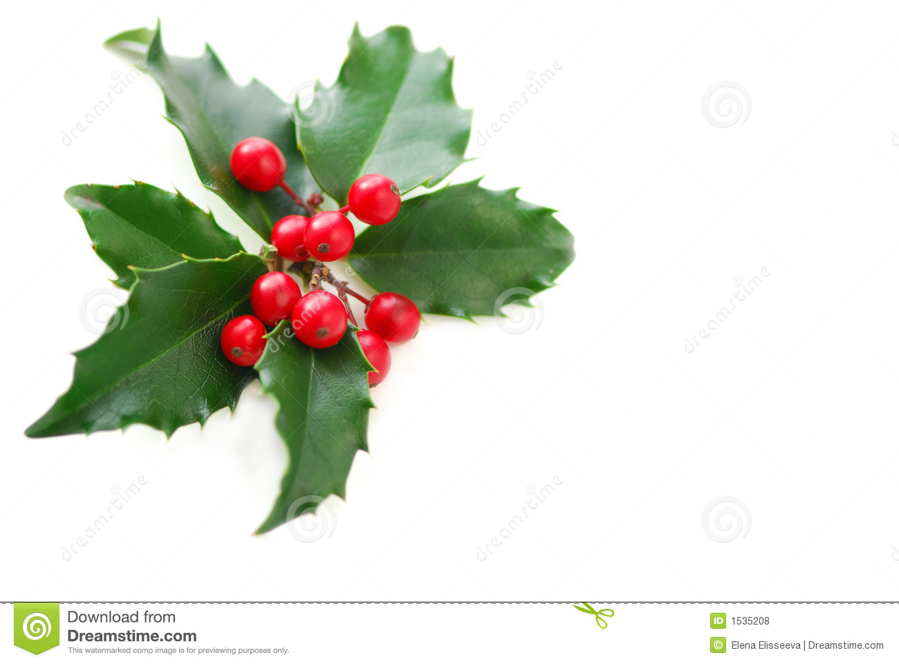Christmas holly stock photo image of colorful symbol for Holl image