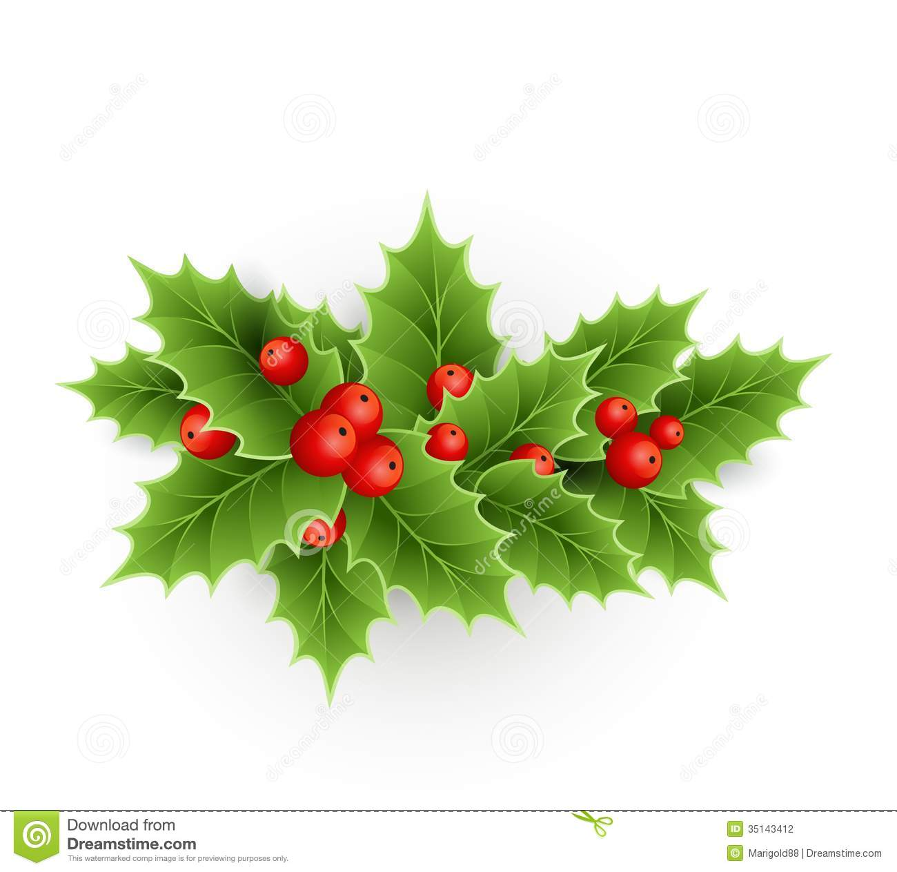 Christmas holly with berries stock vector illustration for Holl image