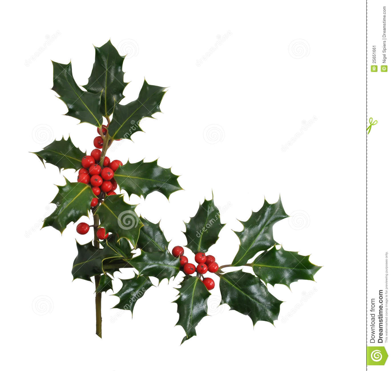 Christmas holly border isolated on white stock image for Holl image