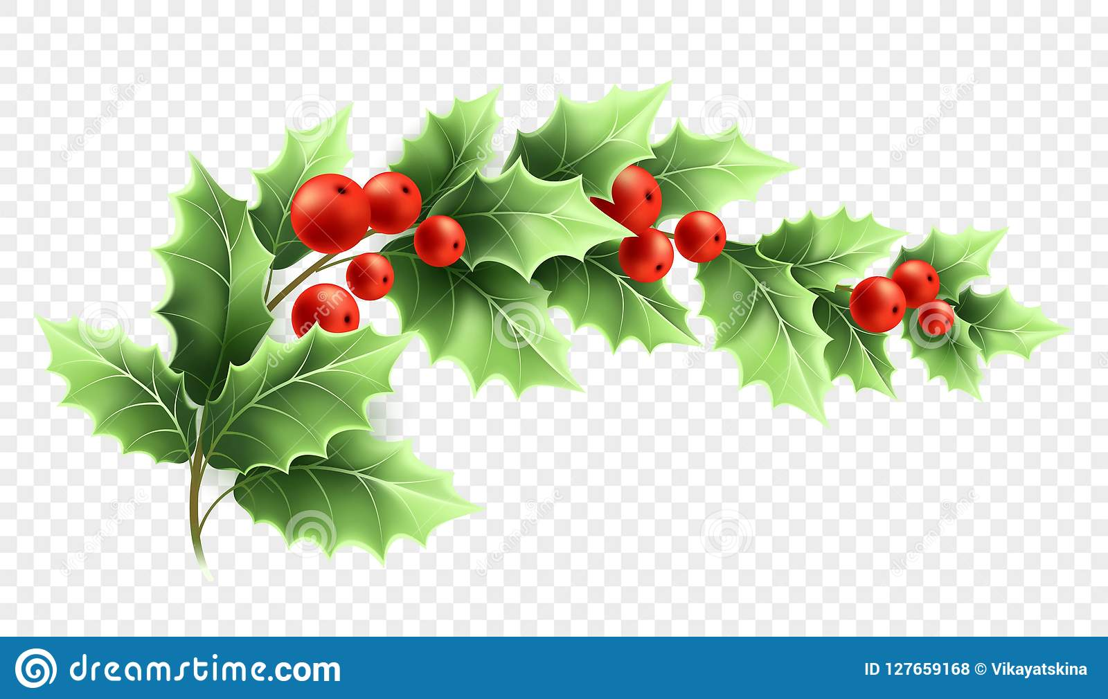 Christmas Holly Clipart Transparent.Christmas Holly Branch Realistic Illustration Stock Vector