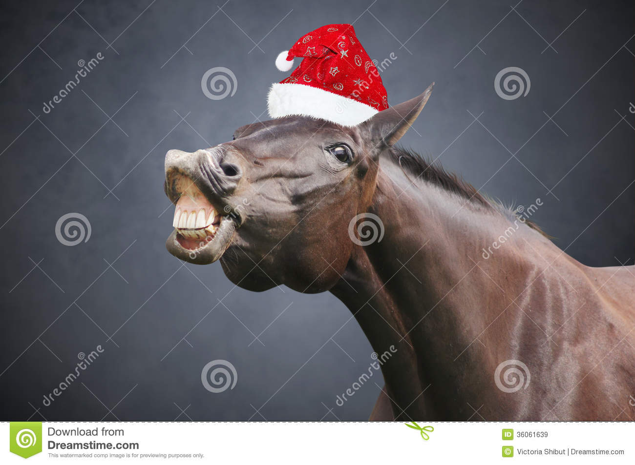 Christmas horse with hat stock image. Image of brown - 36061639 37f7f1b893e1