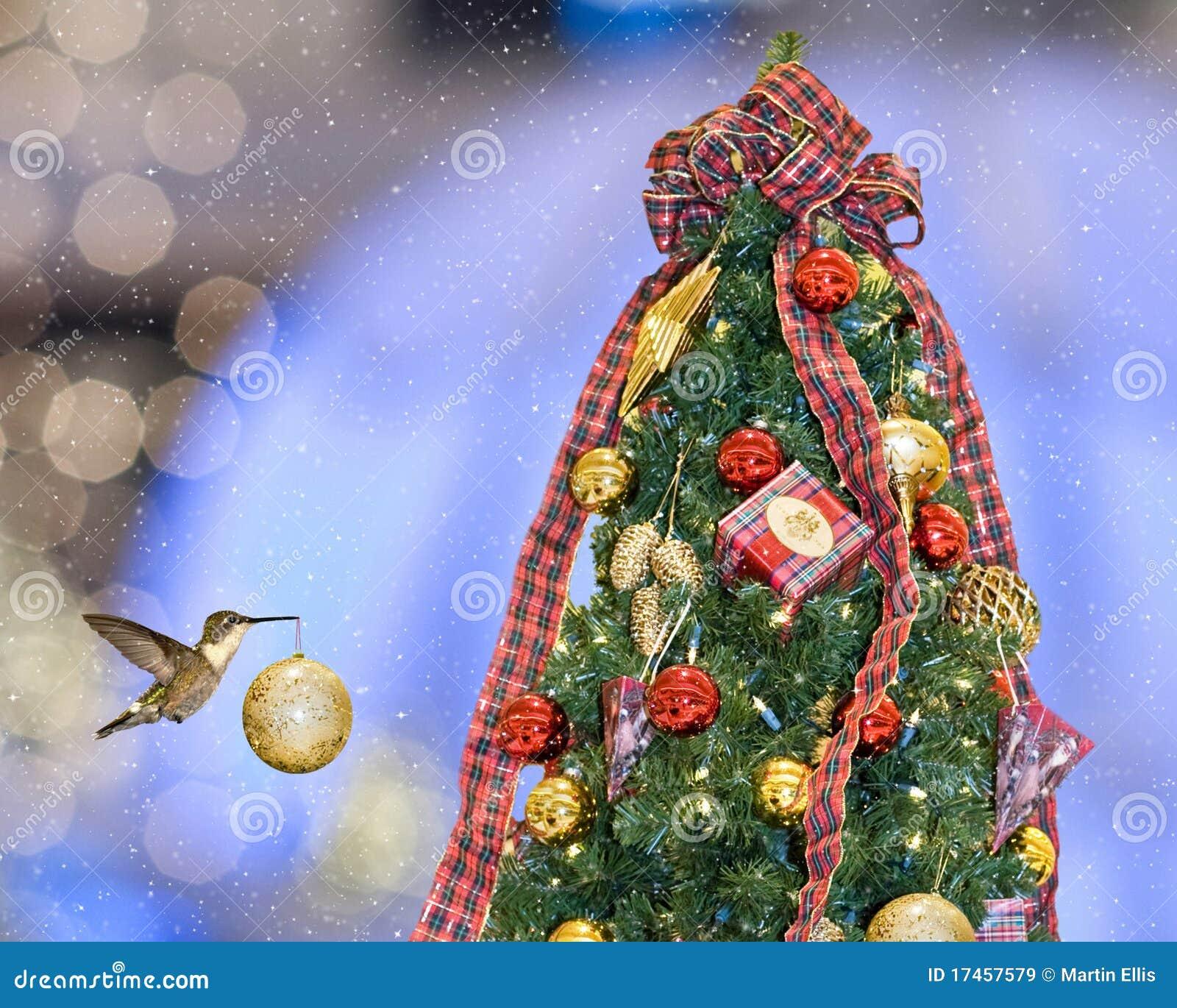 christmas hummingbird royalty free stock images image 17457579