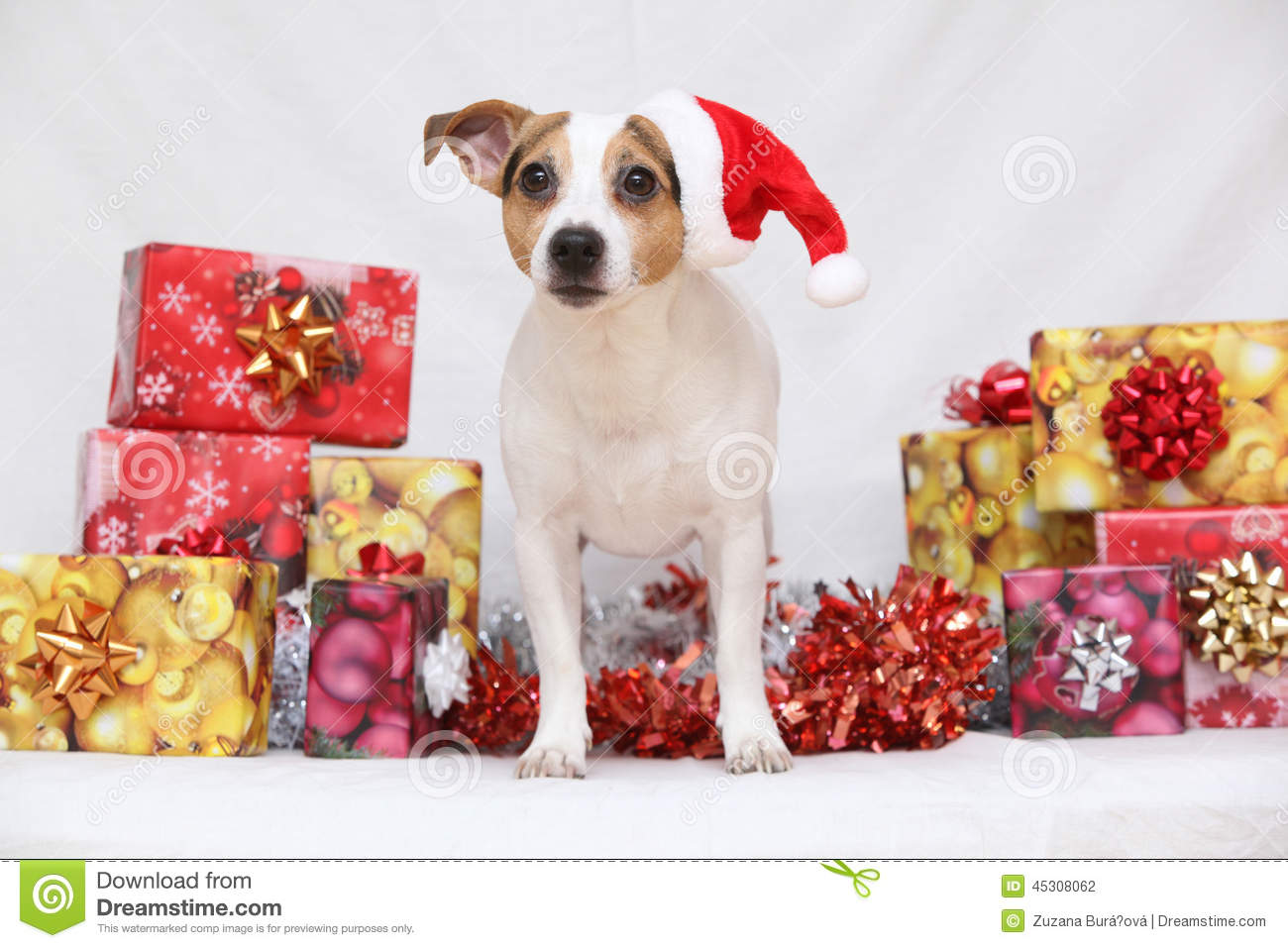 nice christmas jack russell terrier with gifts - Nice Christmas Gifts