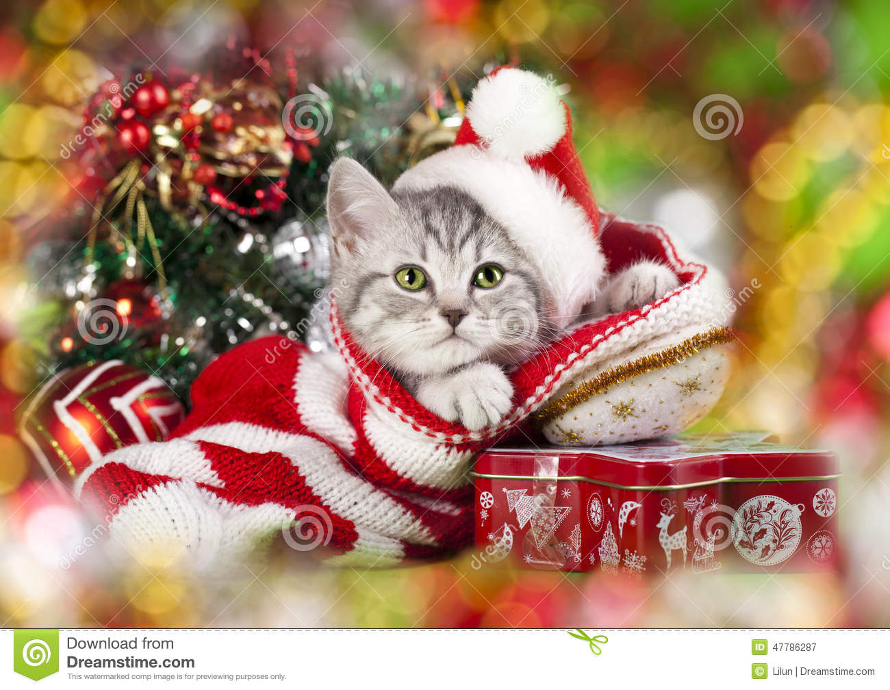 Christmas kitten stock image. Image of xmas, santa, tiger - 47786287