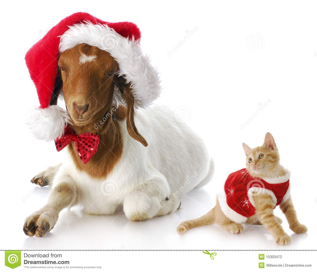 christmas kitten and santa goat stock photo image 15303472. Black Bedroom Furniture Sets. Home Design Ideas