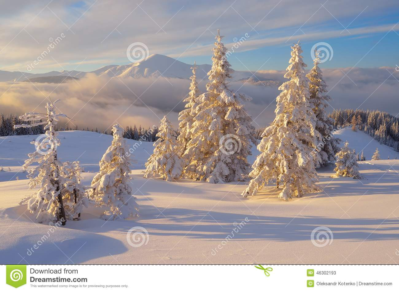 Frost Christmas Trees
