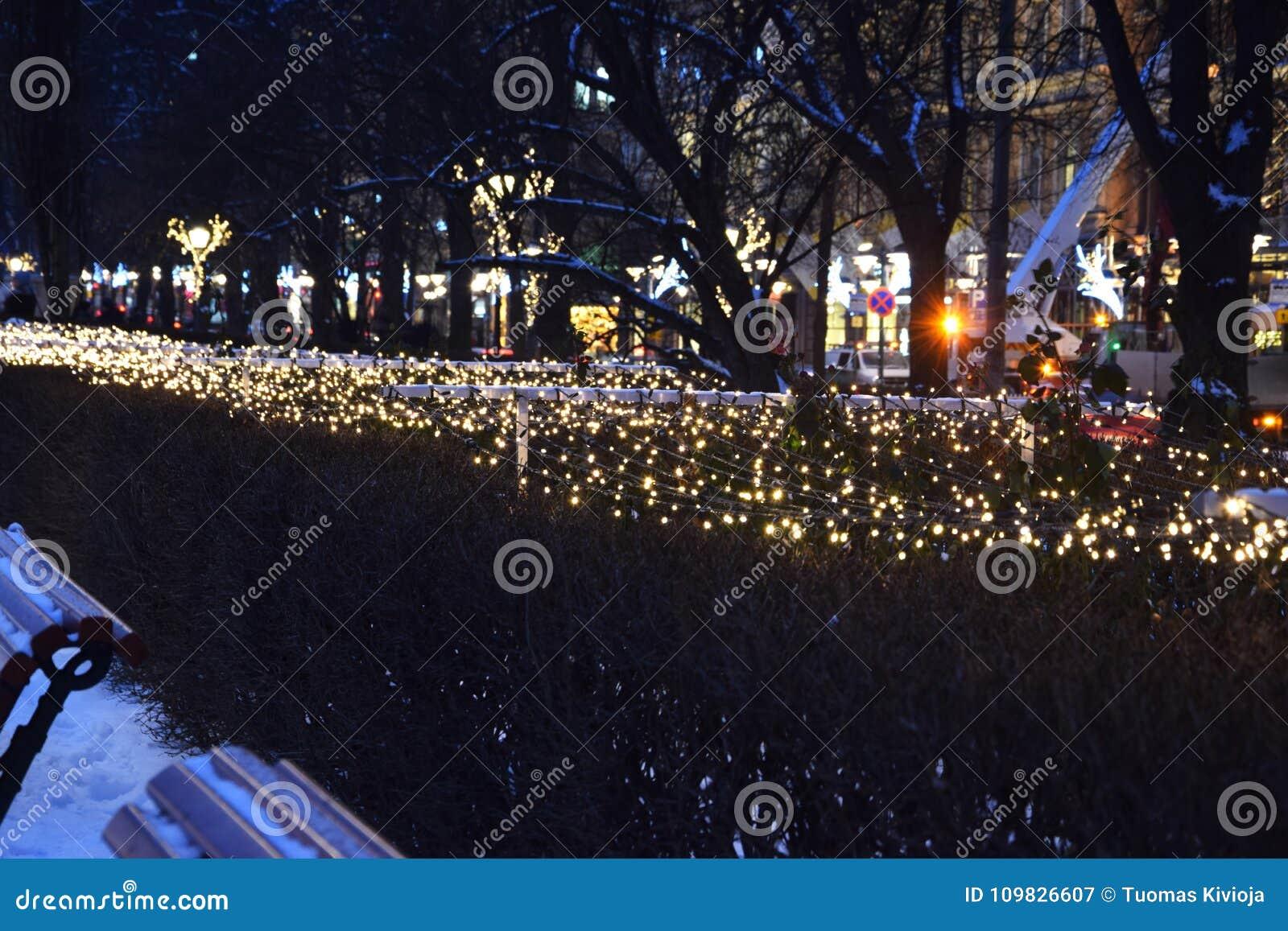 Christmas Bush Lights.Christmas Lights On A Bush In Helsinki Finland Stock Image