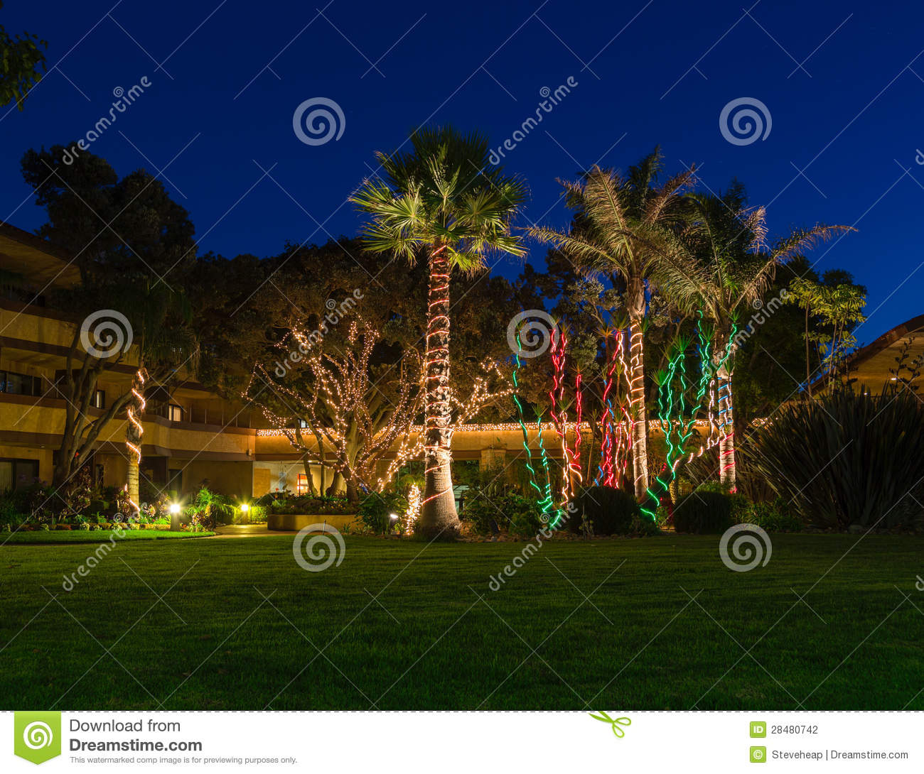 Christmas Lights On Palm Trees Stock Photo Image 28480742