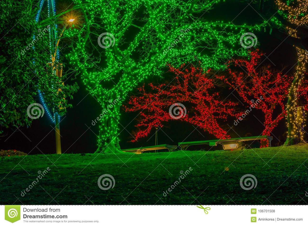 night photo of trees covered with tiny red white and green christmas lights with two park benches under the trees