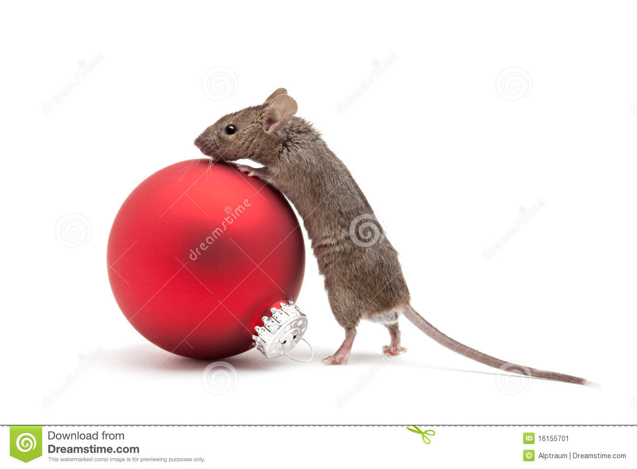 Christmas Mouse.Christmas Mouse And Bauble Isolated Stock Image Image Of