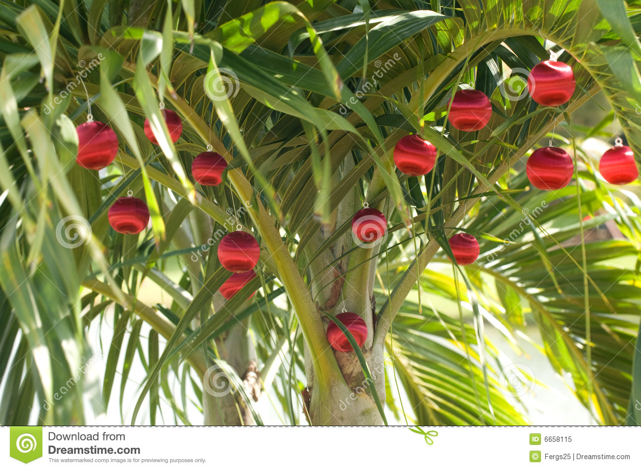 palm tree decorated with red christmas ornaments