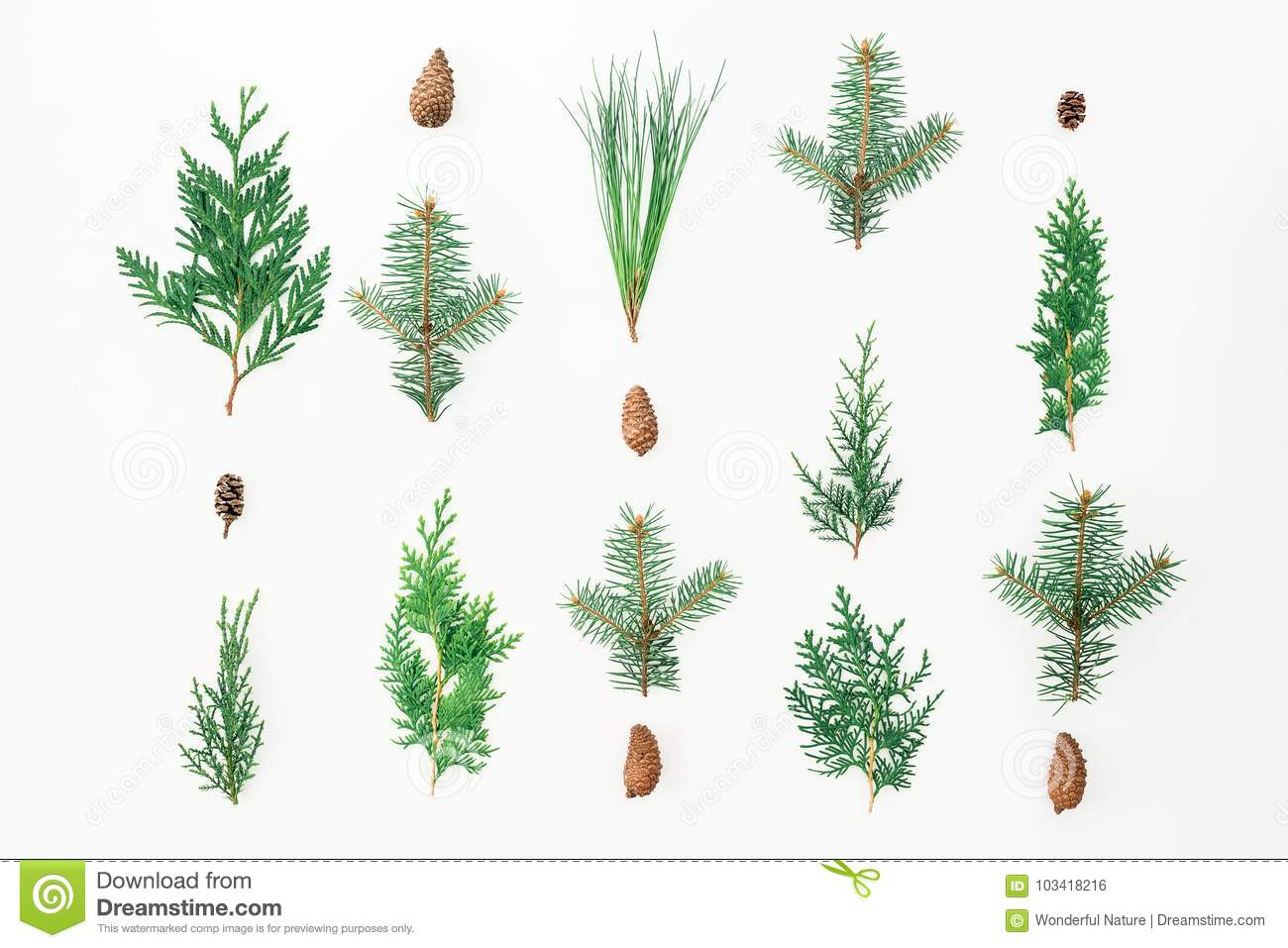 Christmas pattern of winter trees on white background. Christmas or New year concept. Flat lay, top view