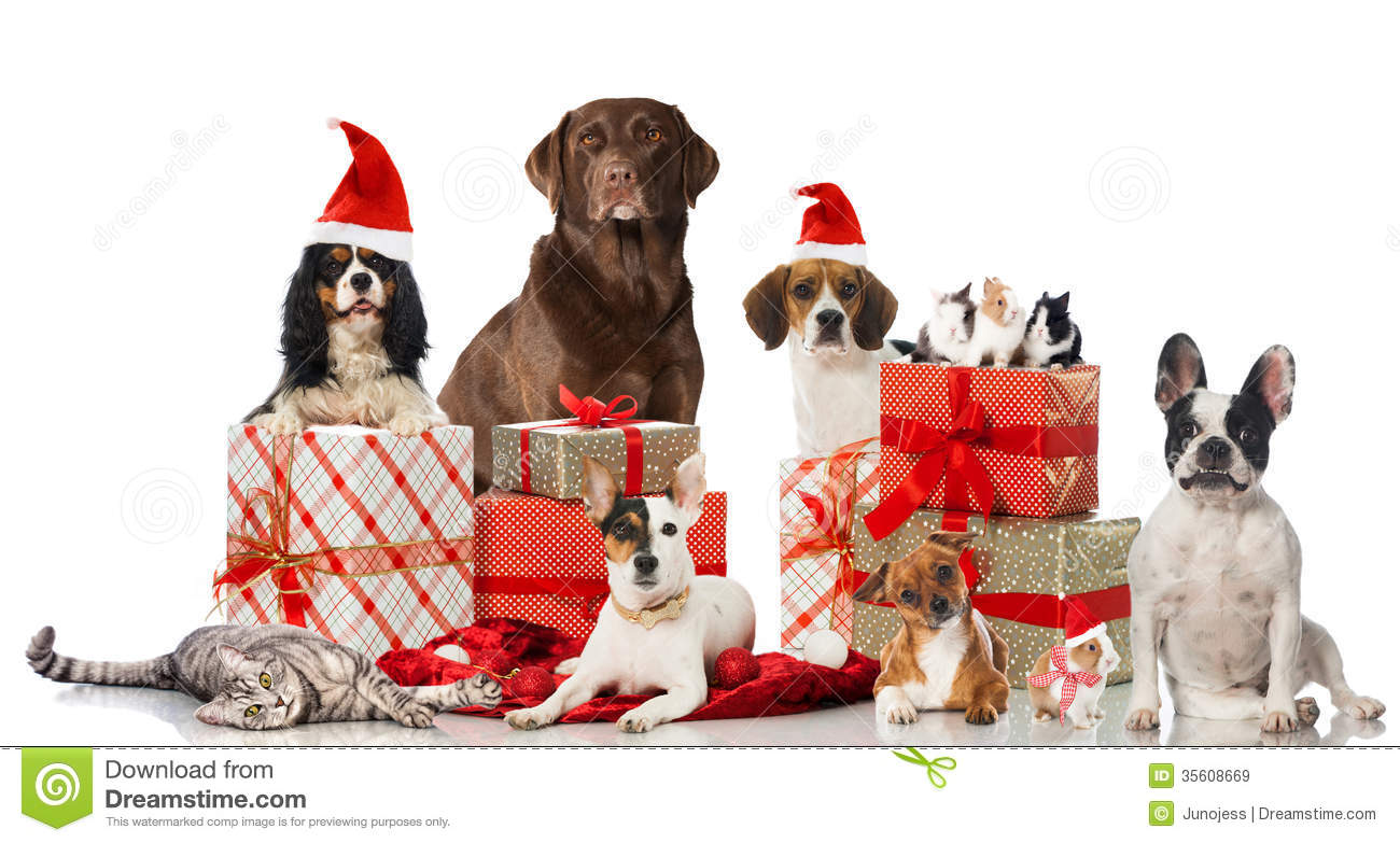 Christmas pets stock image. Image of purebred, decoration ...