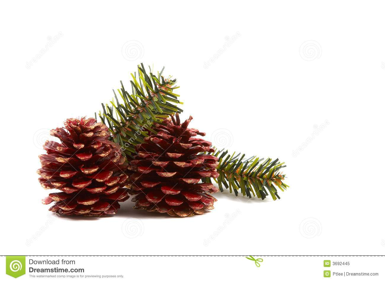 Christmas Pine Cones, Pine Leaves Royalty Free Stock Photo - Image ...