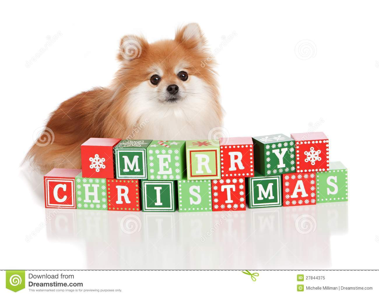 christmas pomeranian royalty free stock photo image schnauzer dog clipart schnauzer clipart without ears cropped