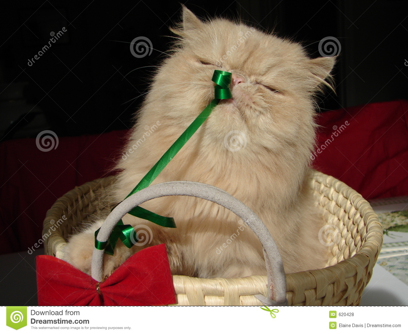Christmas Present Cat Royalty Free Stock Photos - Image: 620428