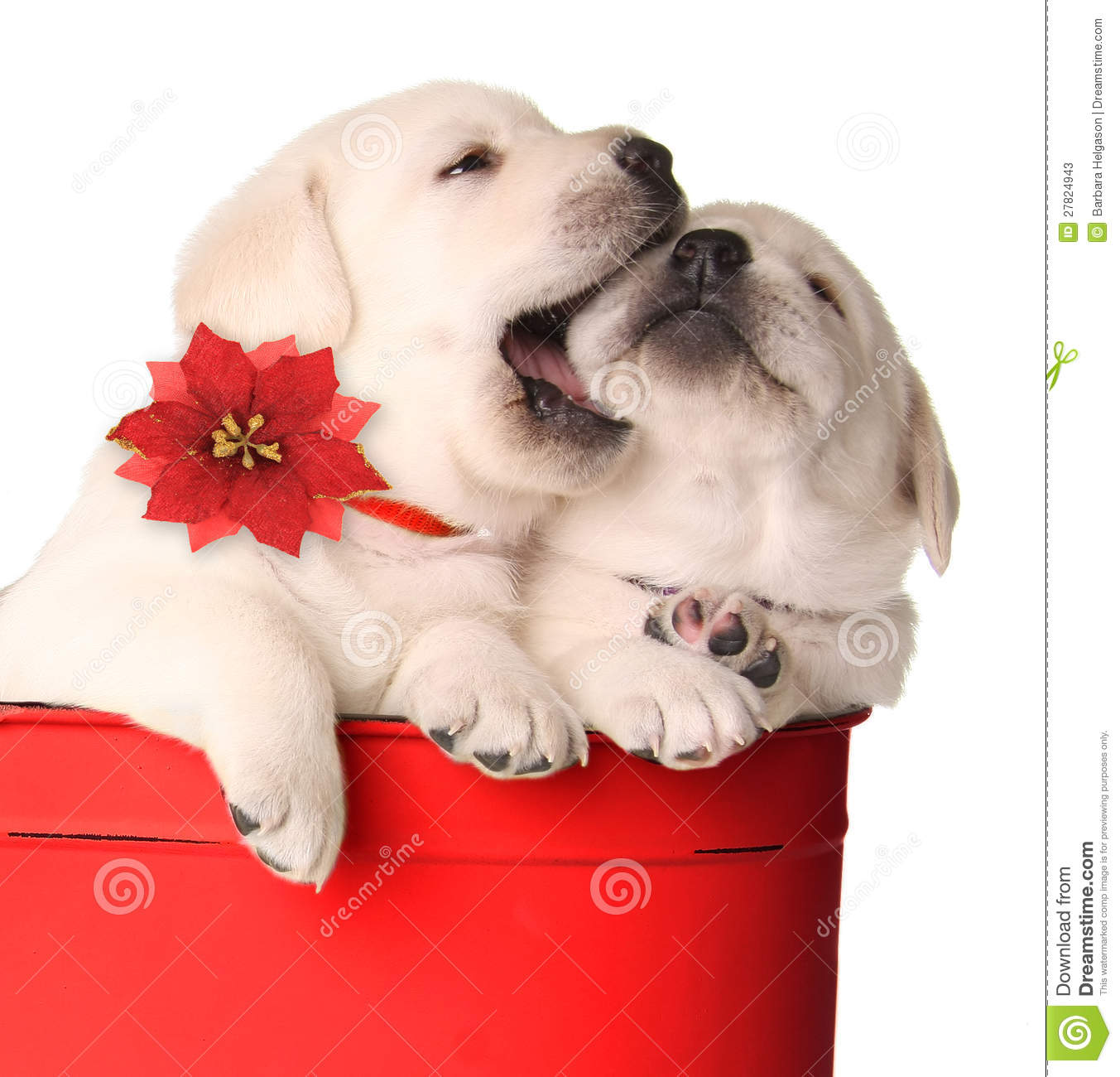 2 225 Christmas Puppies Photos Free Royalty Free Stock Photos From Dreamstime