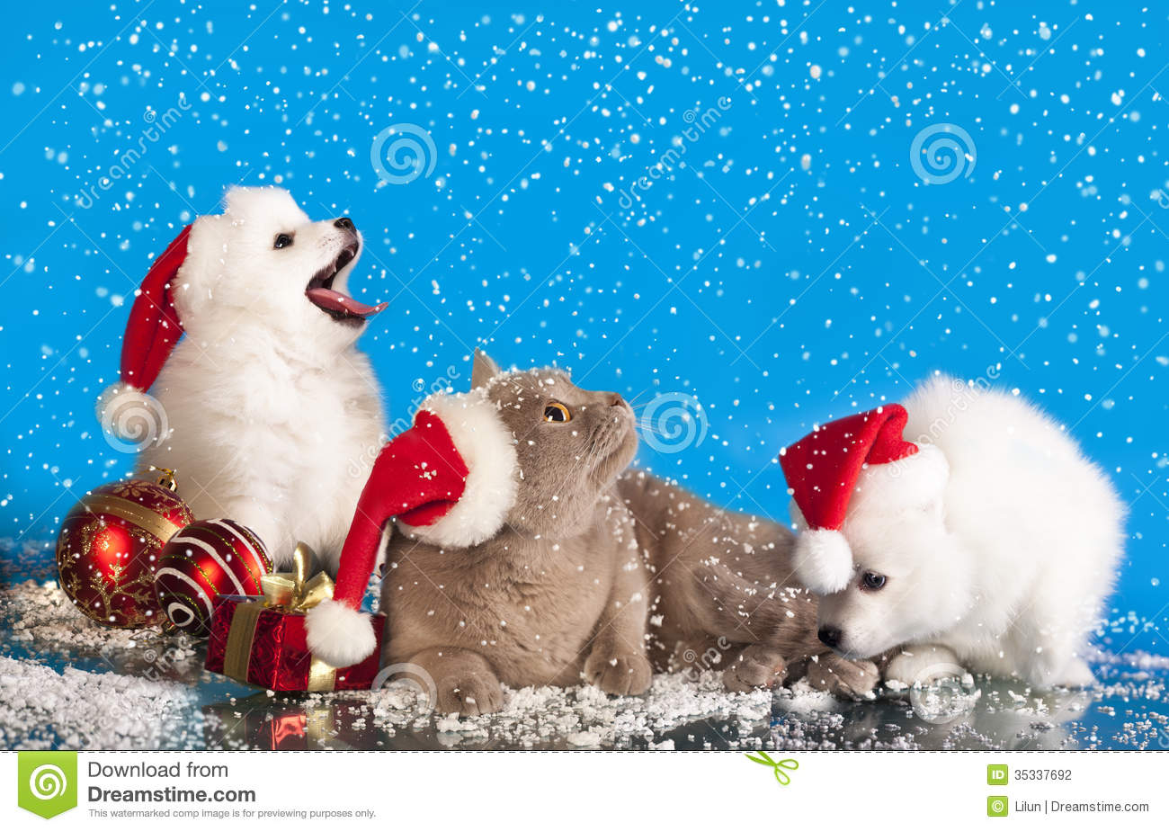 White People Christmas Cards Dog Cat