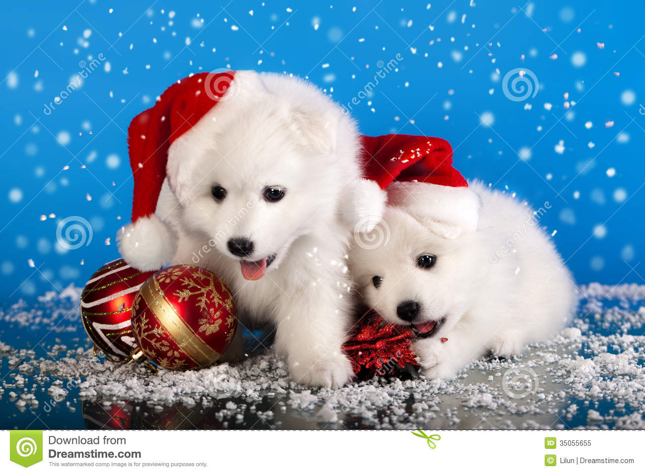 Cute Christmas Puppies.Christmas Puppies Spitz Stock Image Image Of Christmas