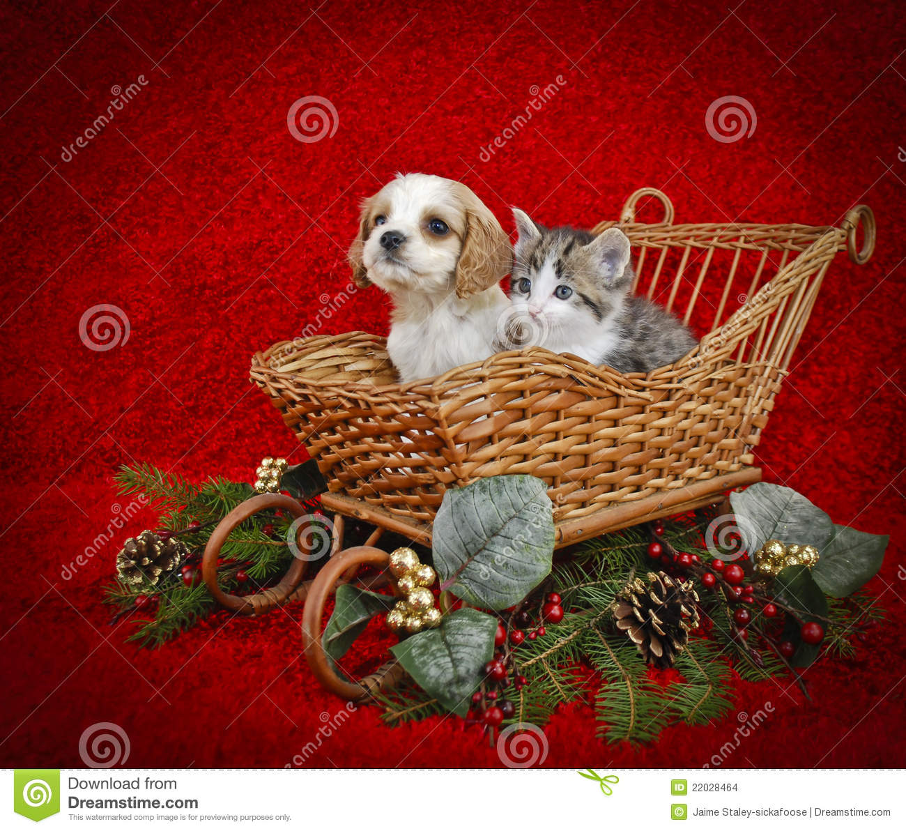 christmas puppy kitten stock photos 700 images