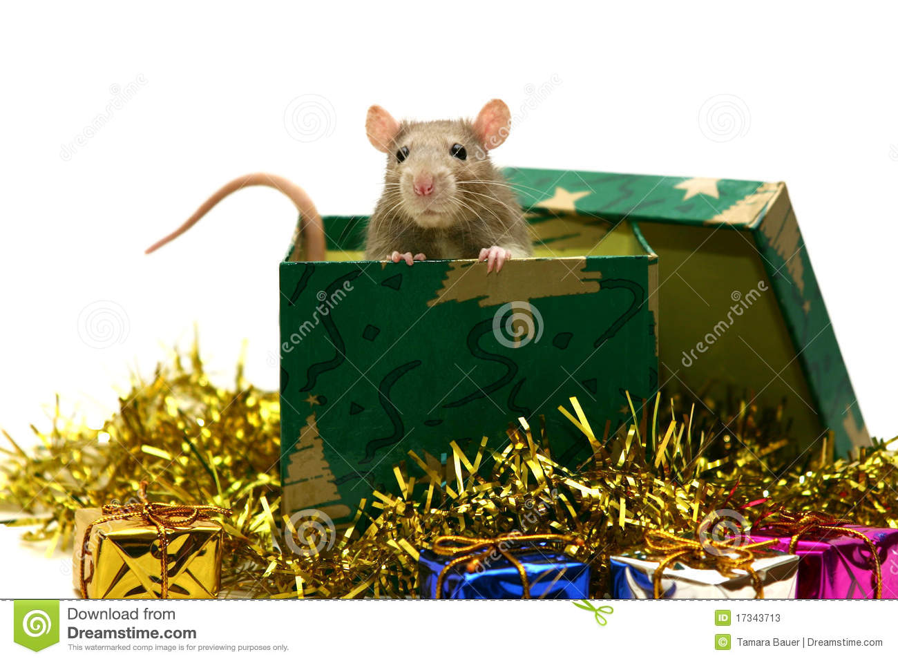 Christmas Rat Stock Photos - Image: 17343713
