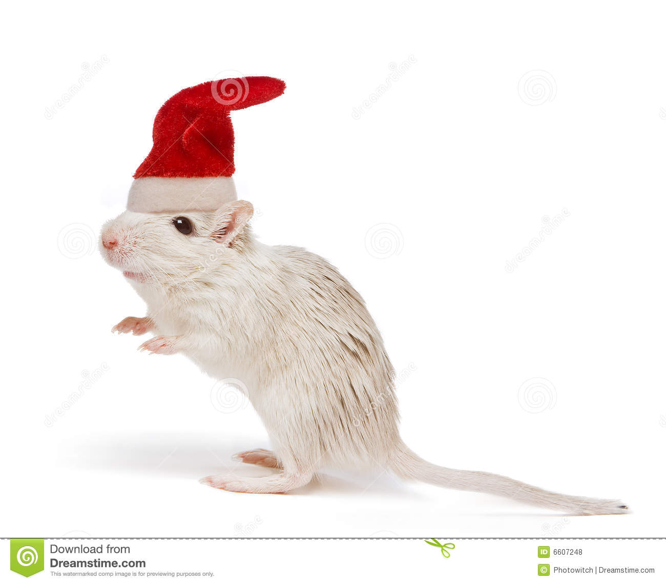 Christmas Rat Royalty Free Stock Photos - Image: 6607248