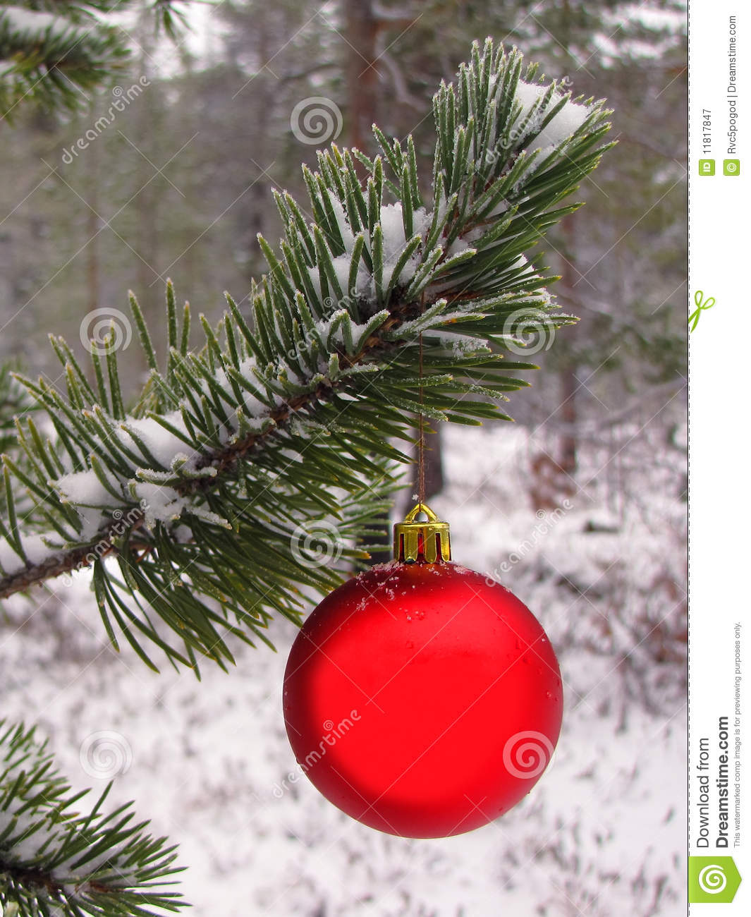 Christmas red ball on tree royalty free stock photography