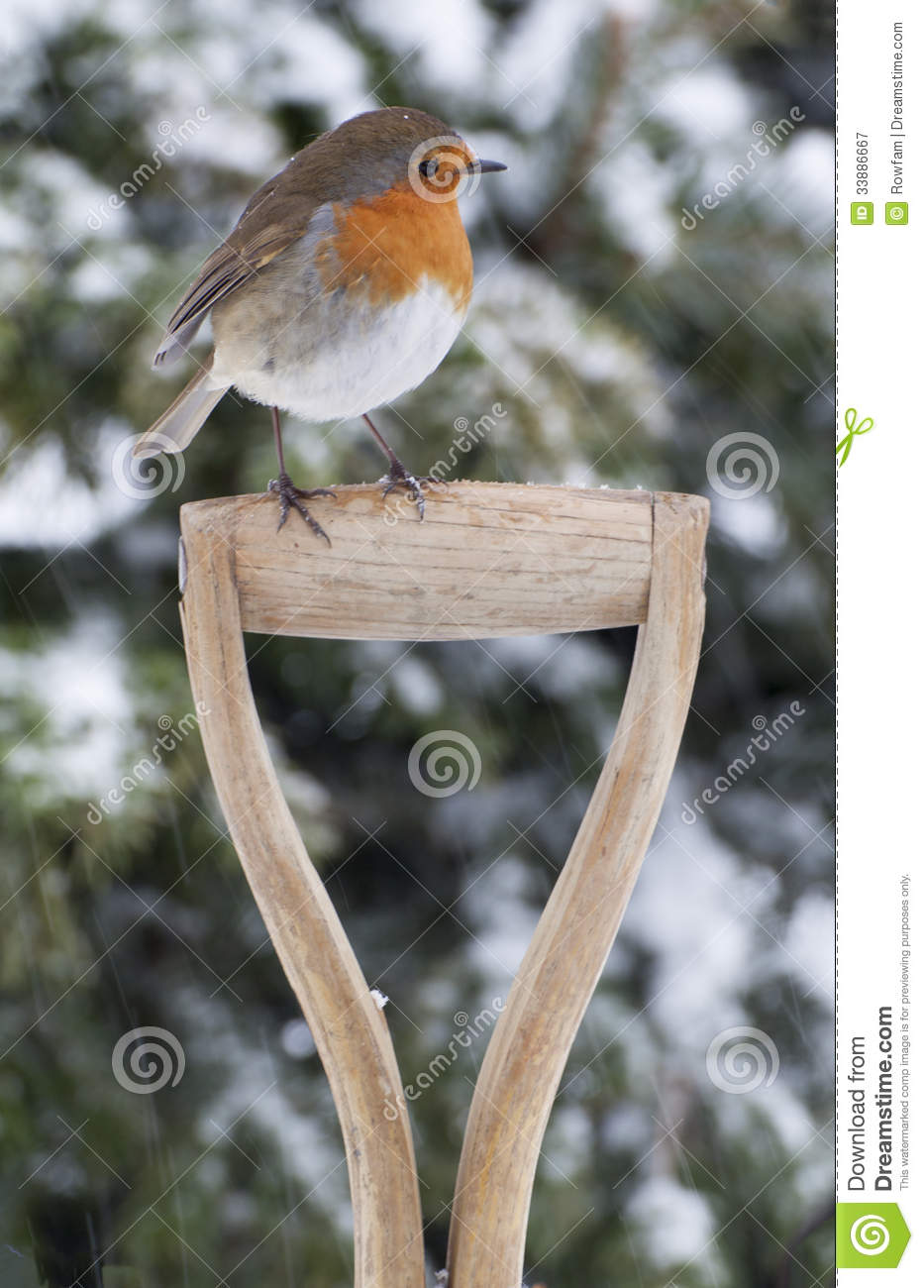 Christmas Robin In The Snow Royalty Free Stock Photography ...