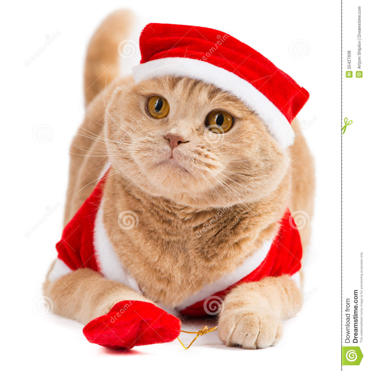 Christmas Santa Cat Carrying Gifts In The Bag Stock Photo - Image of ...