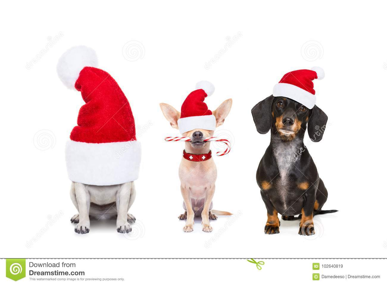 Row Of Dogs On Christmas Holidays Stock Image - Image of celebration ... c95ff90ed1a0