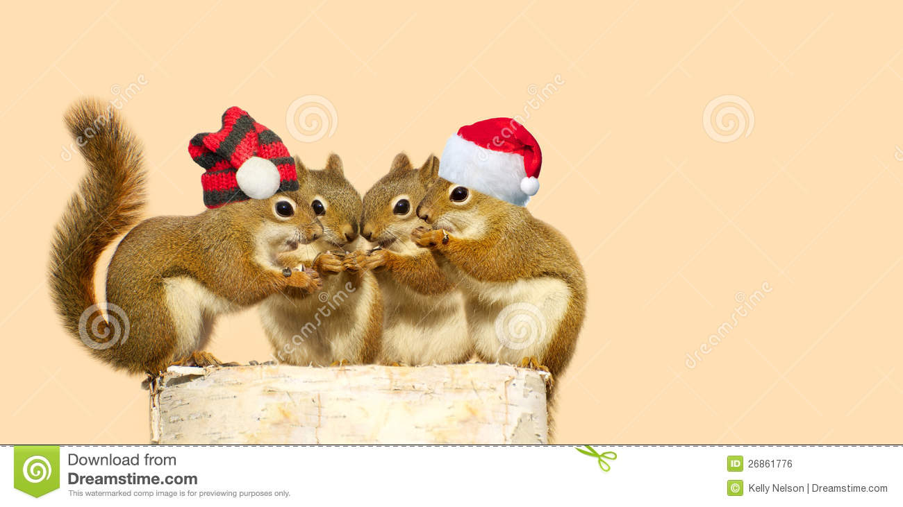 Christmas Squirrels Royalty Free Stock Image Image