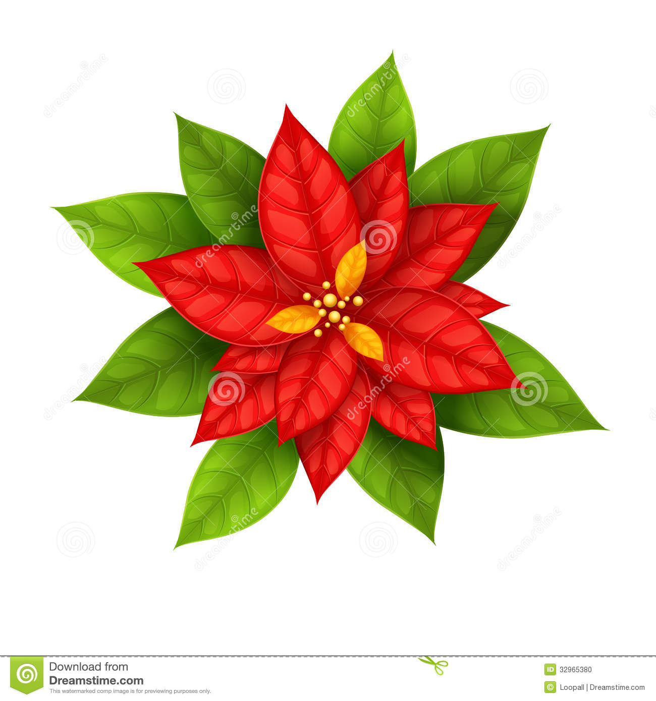 Red Christmas Star flower poinsettia isolated on white background ...