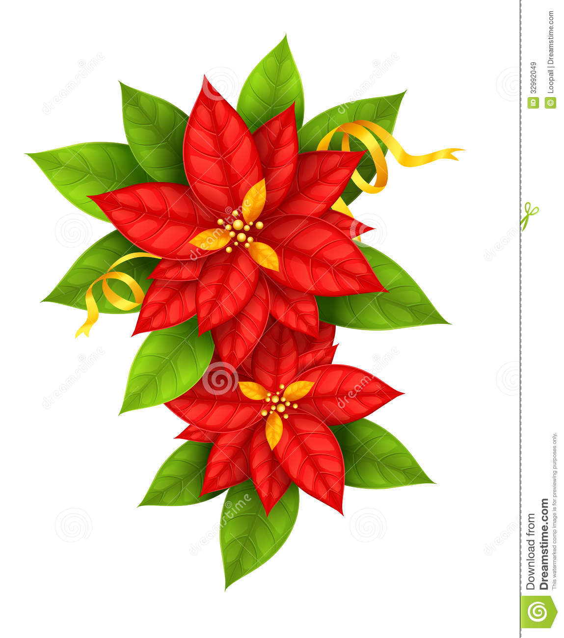 Christmas Star Flowers Poinsettia With Gold Ribbon Royalty Free Stock ...