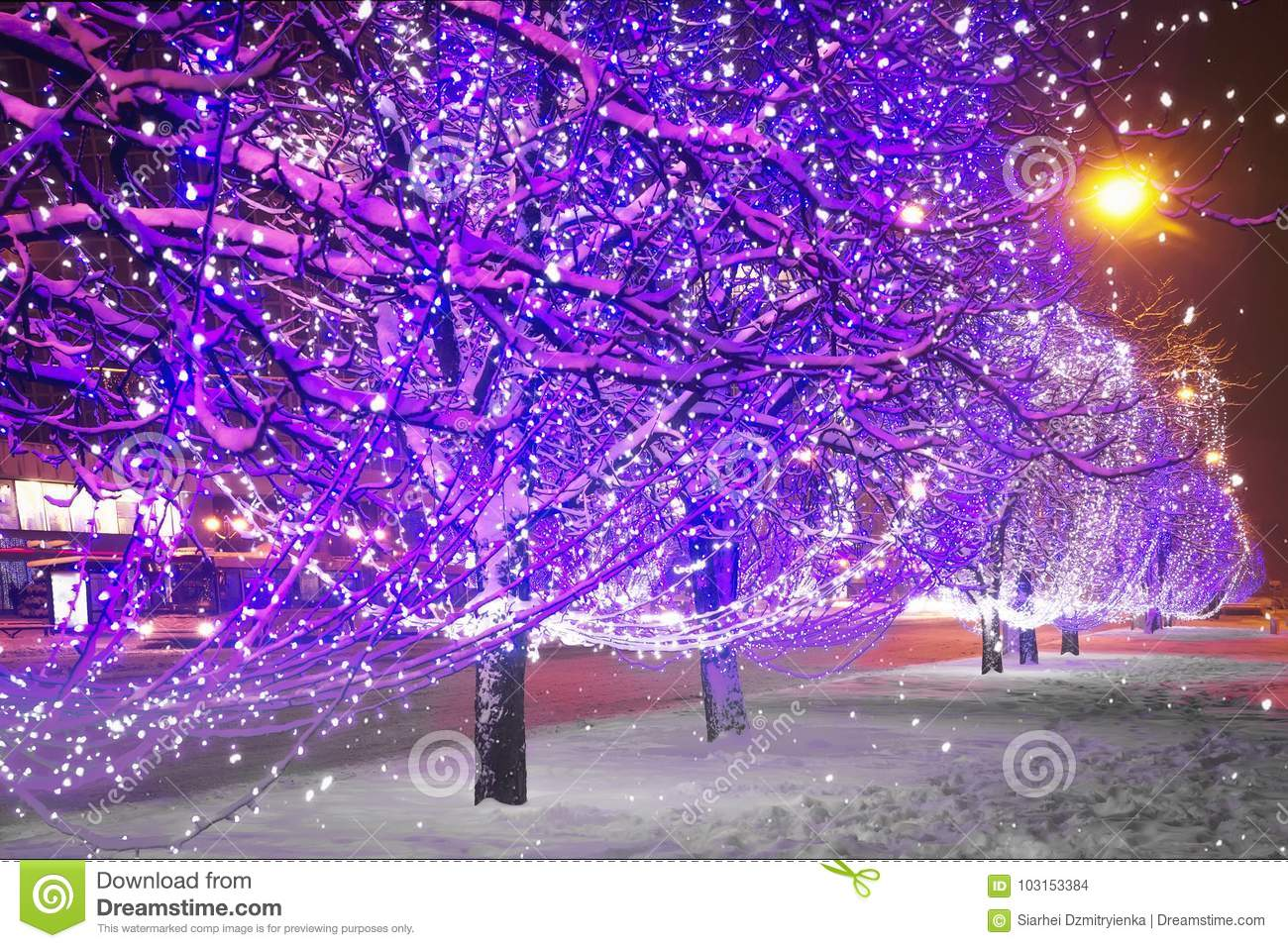 christmas theme in night city shining christmas garlands in trees of the night city
