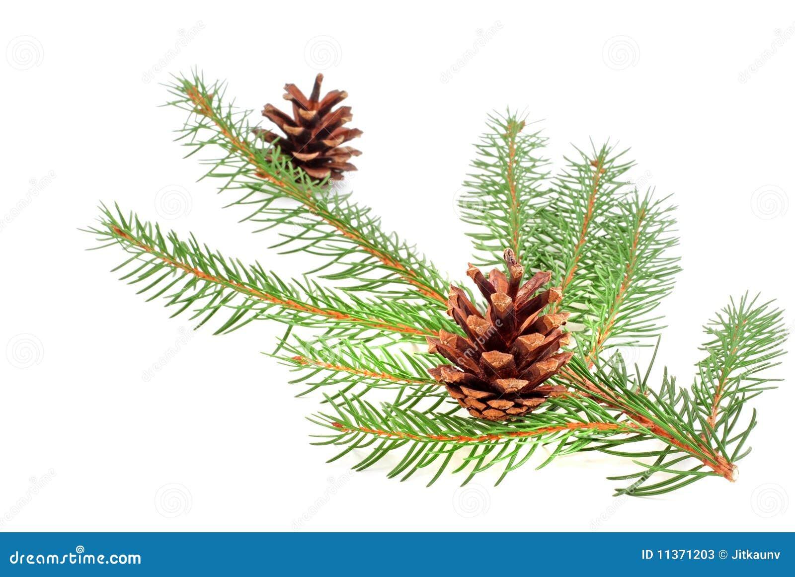 Christmas Tree Bough With Cone Stock Photos - Image: 11371203