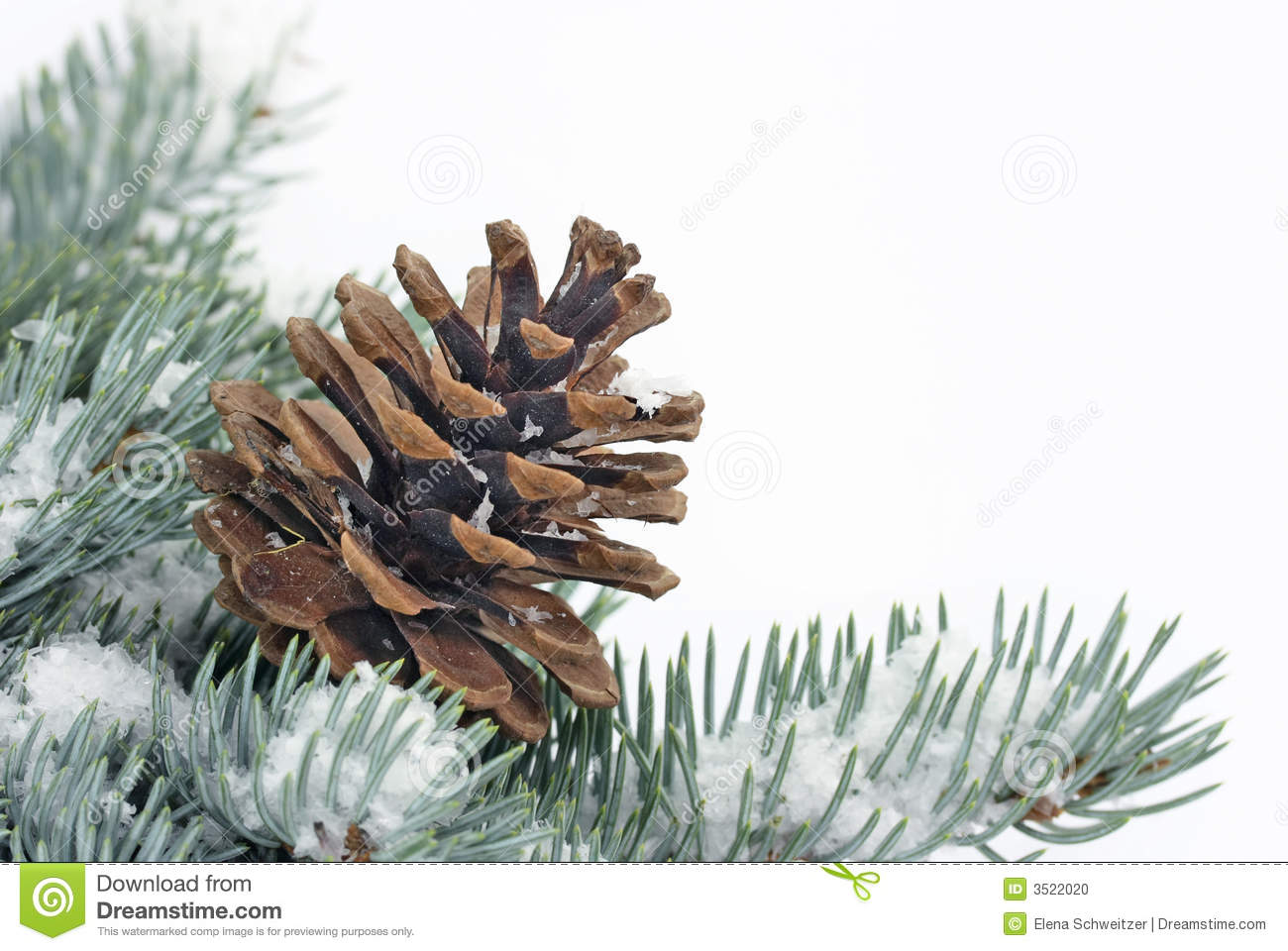 Christmas Tree Bough With Cone Stock Photo - Image: 3522020