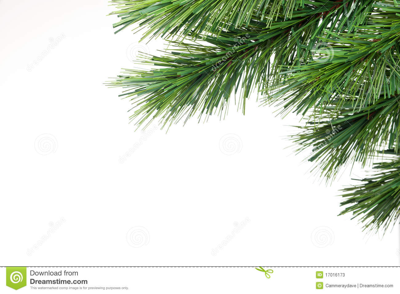 Christmas Tree Branch Background