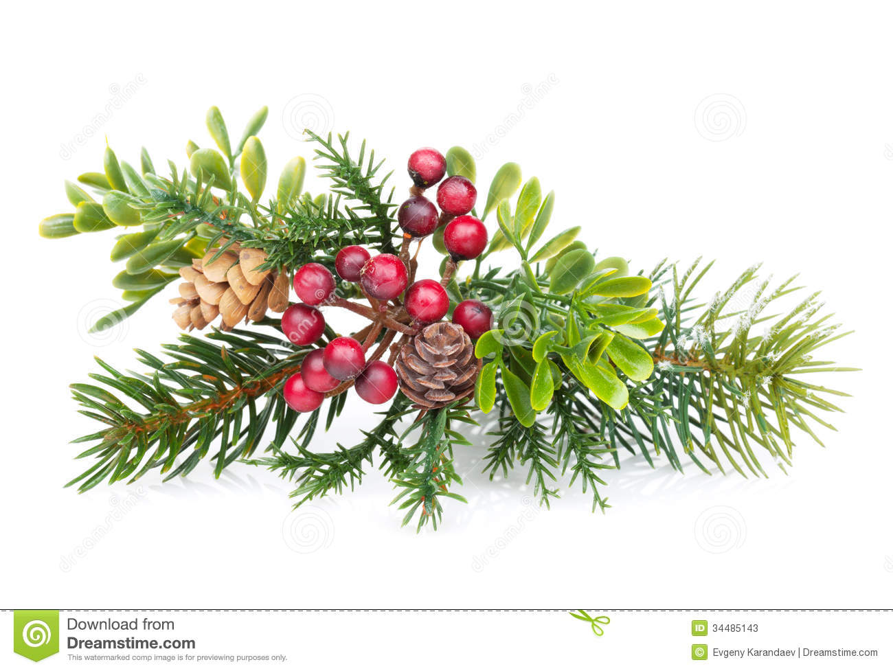 Christmas Tree Branch With Holly Decor Stock Image
