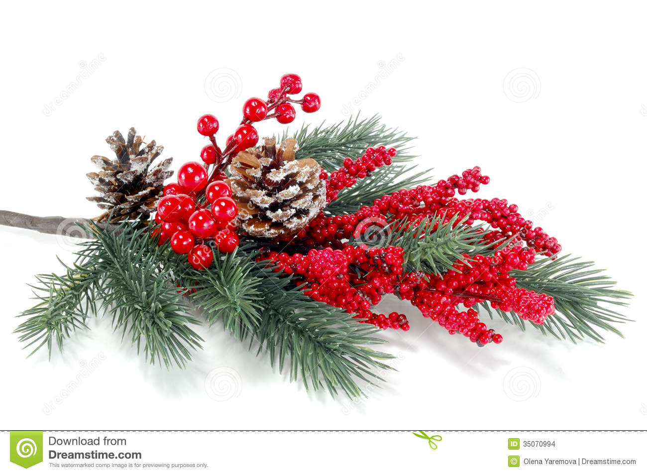 Christmas Tree Branch With Red Berries Stock Photo