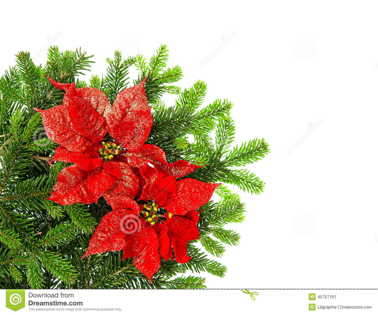 Christmas tree branch with red poinsettia flower over