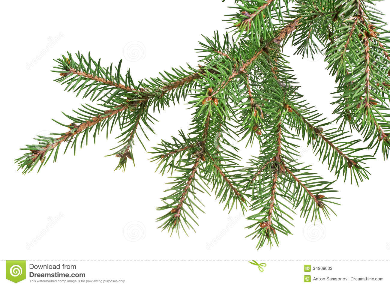Branch Christmas Tree christmas tree with gold star on white background stock