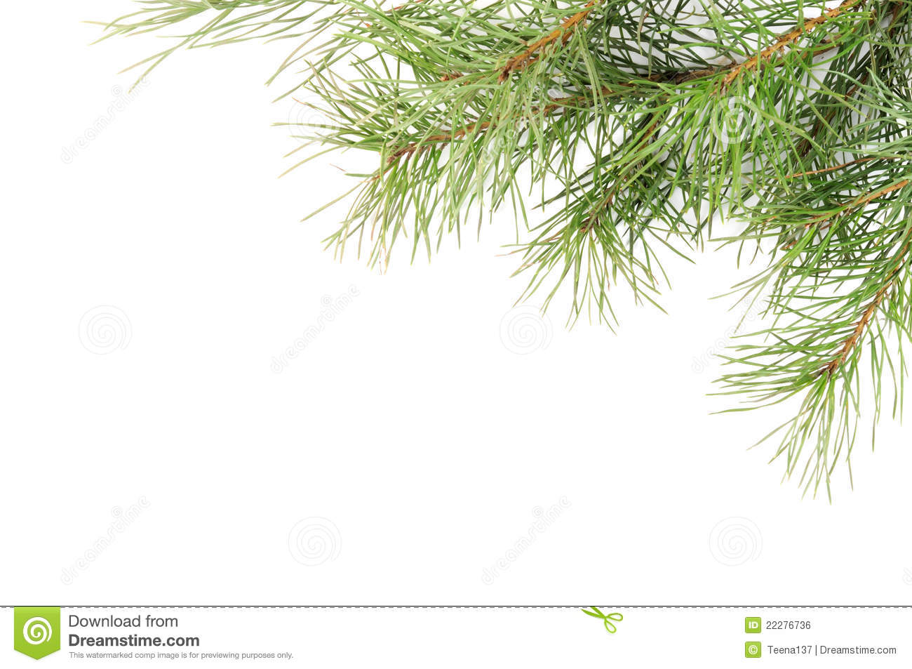 Christmas Tree Branches Royalty Free Stock Image - Image: 22276736