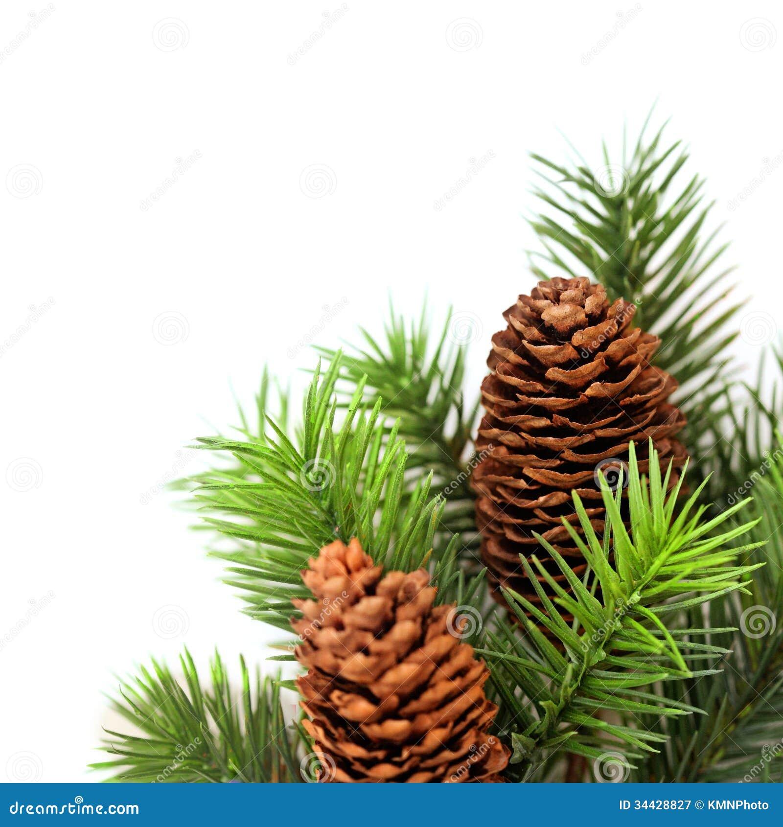 Christmas tree branches stock image. Image of plant, xmas ...