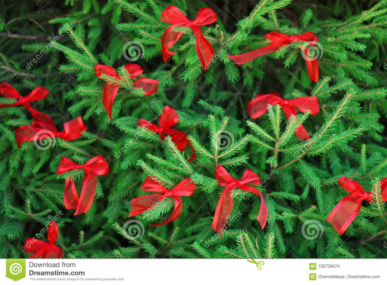 Christmas Tree Branches Decorated With Red Ribbon Bow